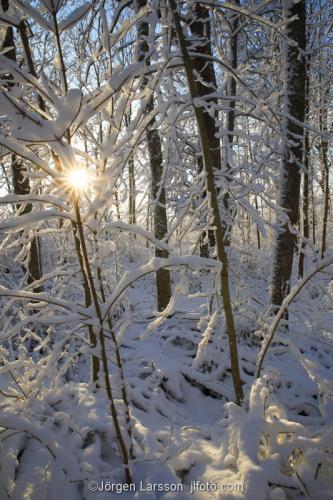 Vinterskog Mörkö Södermanland Sverige snö kallt träd