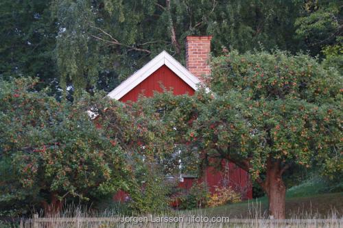 Röd stuga Äppelträd Botkyrka Södermanland