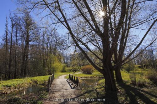 Vår väg träd Tullgarn Södermanland