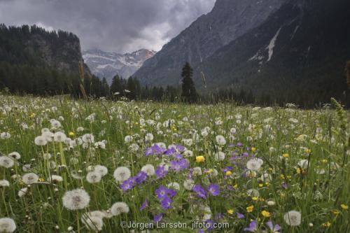 Blomsteräng  Alperna Dolomiterna Italien