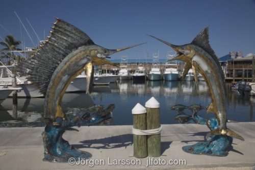 Isla Morada Florida Keys USA  Swordfish