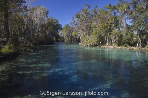 Cristal River Three sistersspring  Florida USA  Manatees  manater sjökor