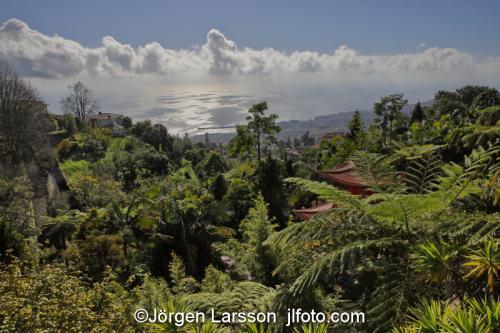 Funchal Madeira  Portugalgarden, trädgård