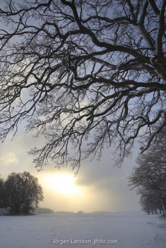 Mörkö Ekar vinter Södermanland Sverige