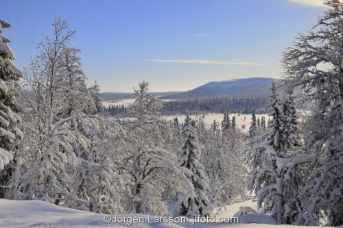 Härjedalen vinter Sverige Fjäll snö vinterskog