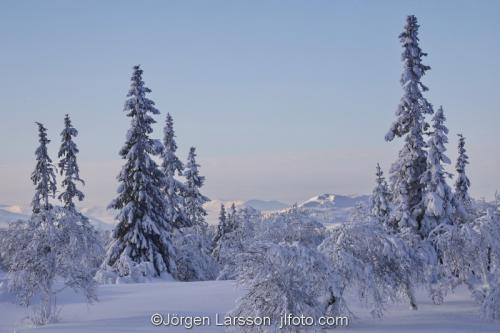 Härjedalen vinter Sverige  Fjäll Vinterskog