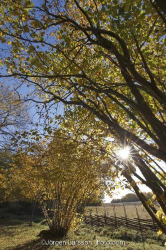 Grödinge Södermanland Sverige Höstlandskap gärdesgård träd löv