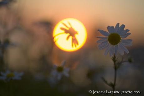 Baldersbrå solnedgång Småland