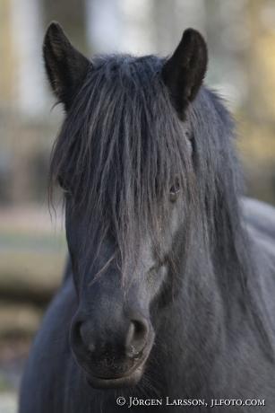 Nordsvensk Häst