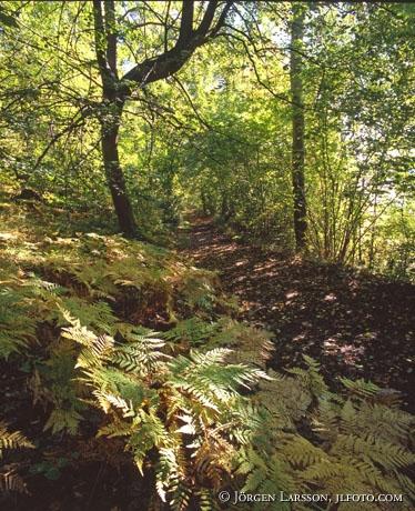 Höst stig ormbunkar Bornsjöns natur reservat