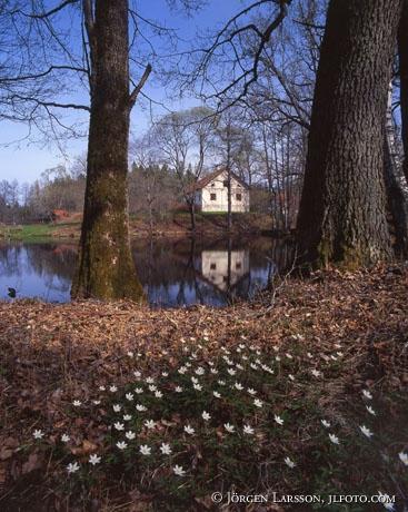 Hävla Östergötland