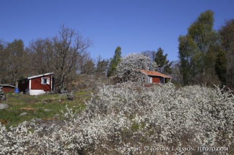 Spring at Navelso