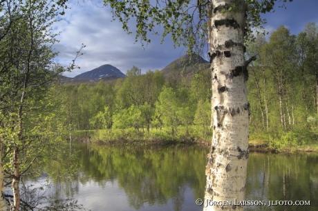 Fjällbjörk, berg, sjö