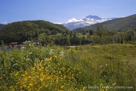 Smörblommor, bergslandskap