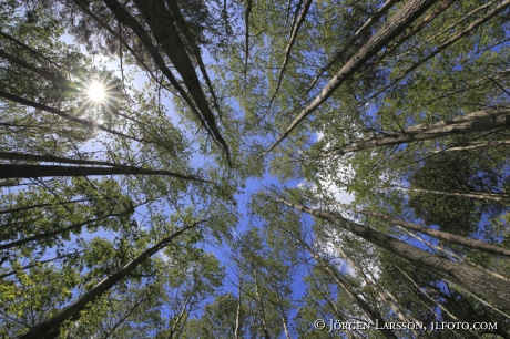 Trees, Sky