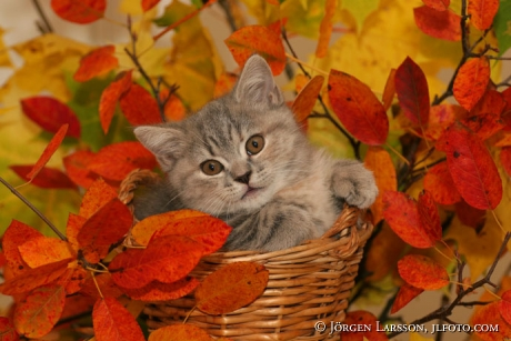 Cat autumnleaves