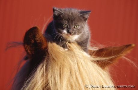 Cat on horse