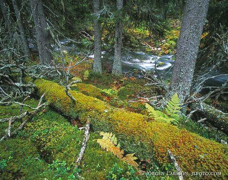 Njupeskärs national park Dalarna