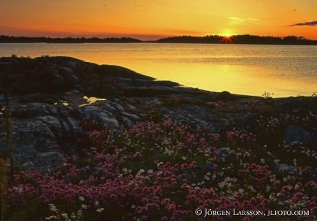 Solnedgång Gräslök Viskären Småland