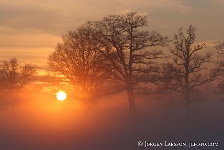 Soldis vinter Mörkö Södermanland