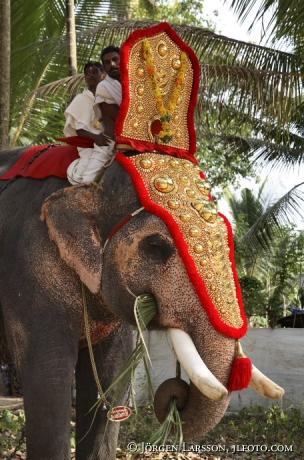 Elephantparade Kerala India