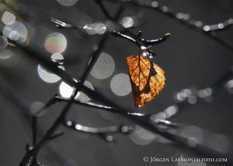 autumnleav