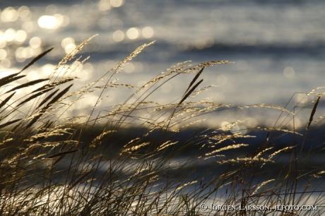 Sun, Sea,