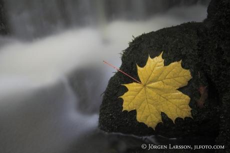 Brinkfallet Sodermanland Sweden