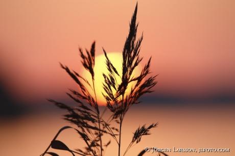 Sunset in Malaren