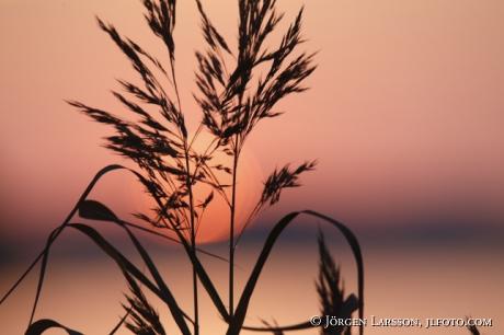 Solnedgång i Mälaren