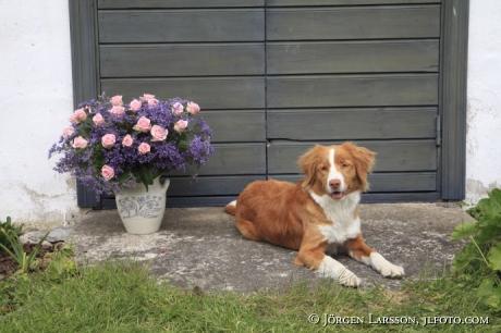 Mixed Flowers Dog