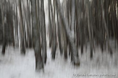 Trädstammar Botkyrka Sverige