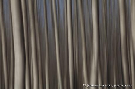 Trädstammar Spanien