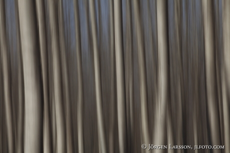 Trees  Spain