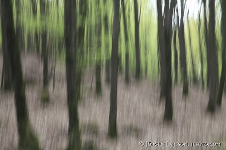 Skäralid Söderåsens nationalpark Sverige