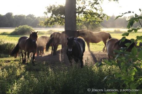 Horses Kalmar Sweden