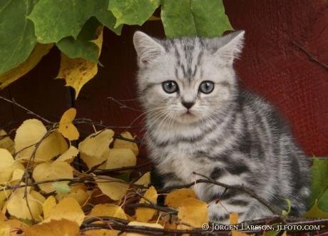 Katt bland höstlöv