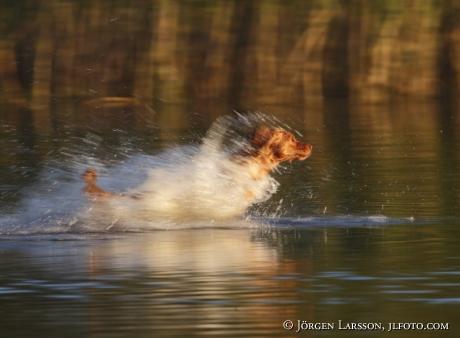 Tollare springer i vattnet Ånhammar Södermanland