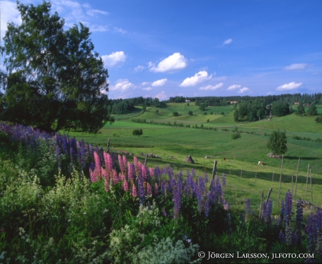 Summerlandscape