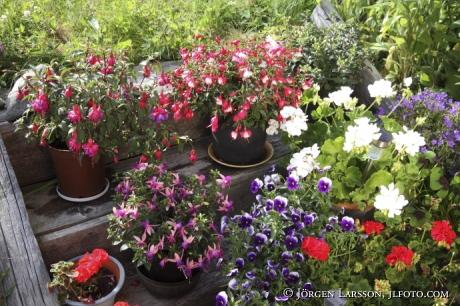 Blomkrukor i Trädgård Nävelsö Småland