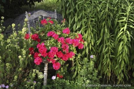Blommor på gammal stol Nävelsö Småland