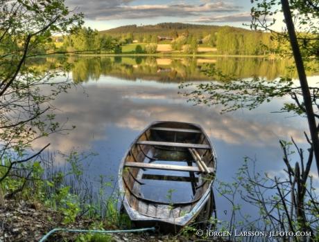 Eka vid Järvsö  Hälsingland Sverige