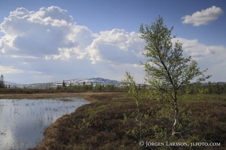 Saxvallen västra Jämtland Sverige