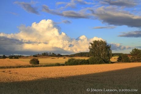 Vetefält vid Söderköping Östergötland Sverige